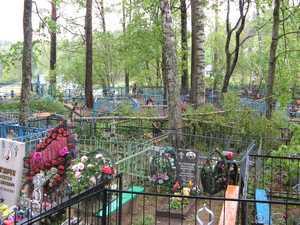 Вдали от храма,  на древнем кладбище Пушкинских Гор, живая ветвь березы лежит на могильных оградах. Хорошо, что никого не было, когда эта тяжелая ветвь упала.